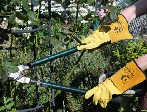 How to find the right gardening gloves