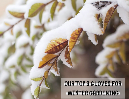 Our Top 3 Gloves for Winter Gardening